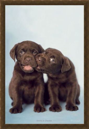 Framed Framed Emma & Chester - By Rachel Hale