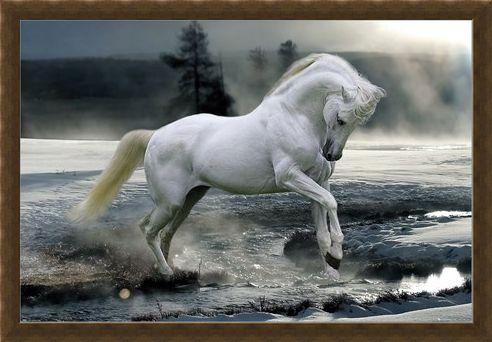 Framed Framed Horse Snow - Bob Langrish