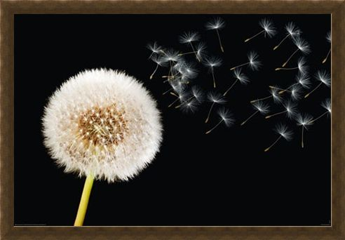 Framed Framed Dandelion Dream - Fly Away