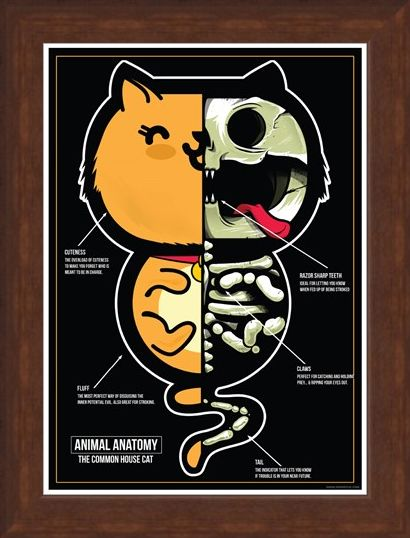 Framed Framed The Common House Cat - Animal Anatomy