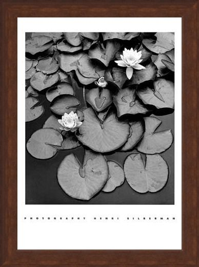 Framed Framed Waterlilies - Henri Silberman