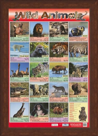 Framed Framed Time To Go Wild! - Wild Animals