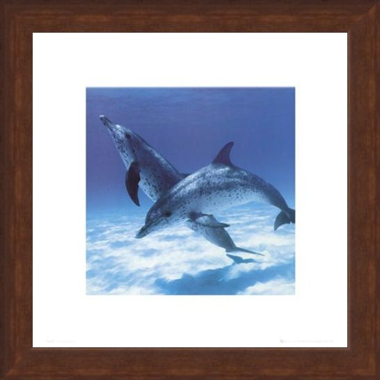 Framed Framed A Pair Of Bottle Nose Dolphins - Daniel McCulloch