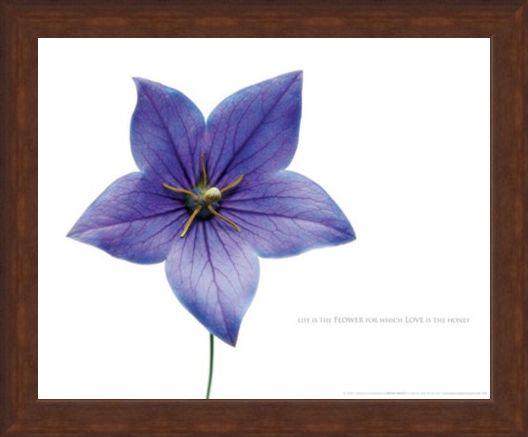 Framed Framed Life is the Flower - Love