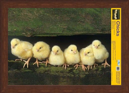 Framed Framed Cute Chicks - Your Favourite Farm Friends