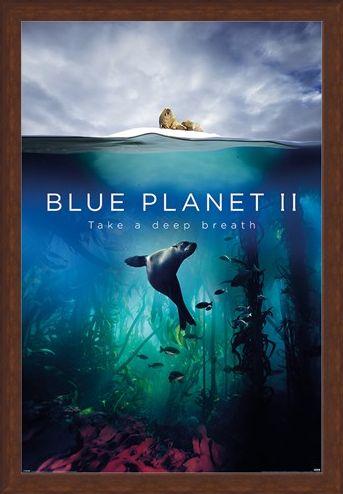 Framed Framed Take A Deep Breath - Blue Planet 2