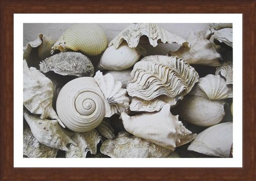 Framed Framed Still Life with Shells - Rene and Barbara Stoeltie
