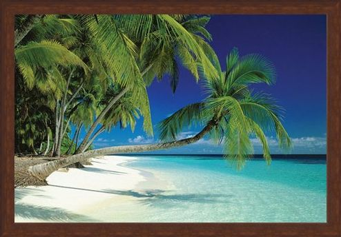 Framed Framed Maldives Beach and Sea - Palm Trees on a Tropical Island Paradise