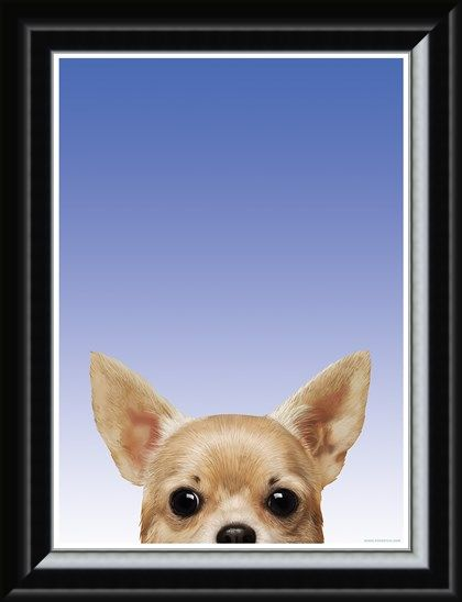 Framed Framed Chihuahua - Inquisitive Creatures