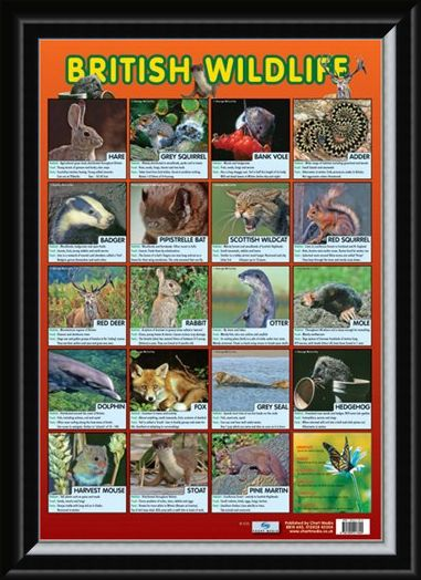 Framed Framed British Wildlife - Native British Animals