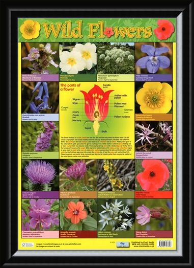 Framed Framed Wild Flowers - Parts of a Flower