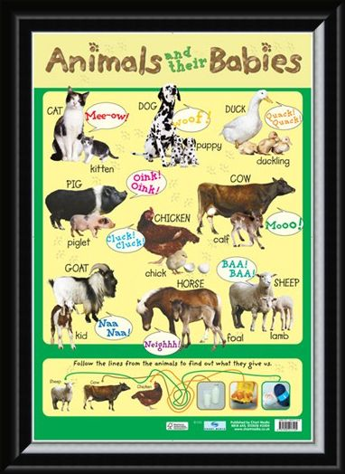 Framed Framed Animals and their Babies - Down On The Farm