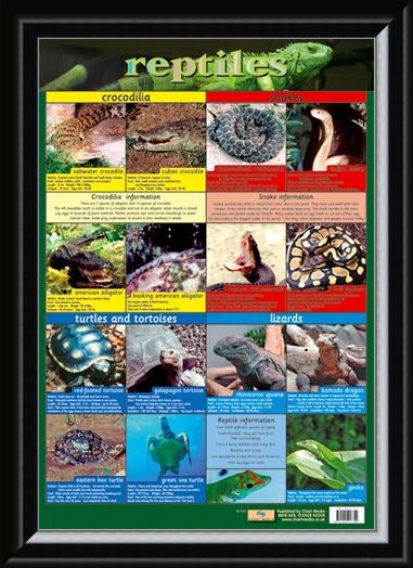 Framed Framed Reptiles - Snake, Rattle and Roll