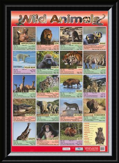 Framed Framed Time To Go Wild! - Wild Animals