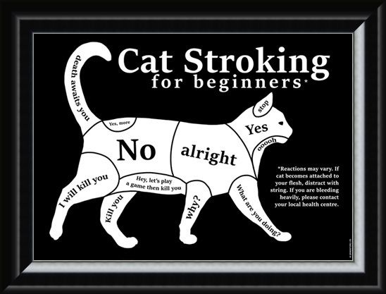 Framed Framed Cat Stroking - For Beginners