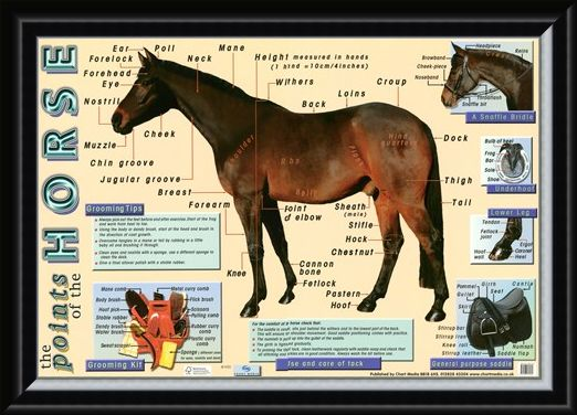 Framed Framed Points of the Horse - Equine Care