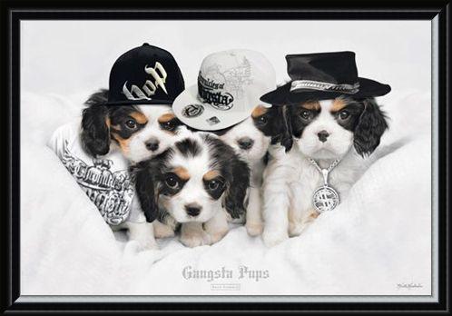 Framed Framed Gangsta Pups - Keith Kimberlin
