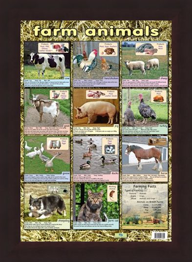 Framed Framed Farm Animals - Down On The Farm