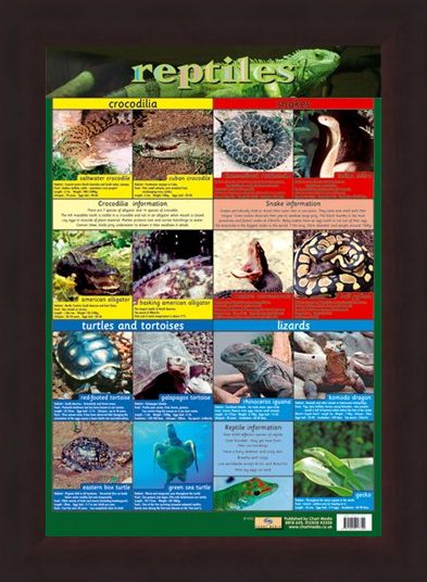 Framed Framed Reptiles - Snake, Rattle and Roll