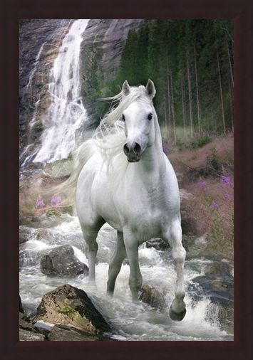 Framed Framed Horse in a Waterfall - Bob Langrish