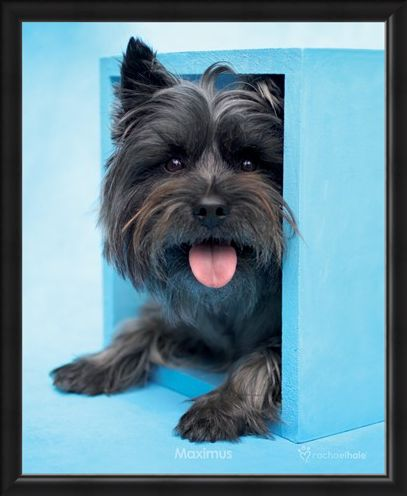 Framed Framed Maximus the Puppy - By Rachael Hale