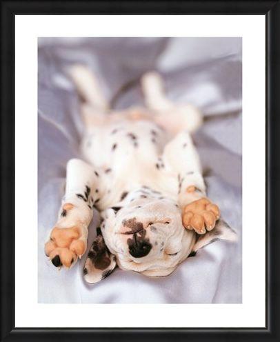 Framed Framed Monty - Rachael Hale