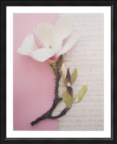 Framed Framed Emma's Garden Magnolia - Deborah Schenck