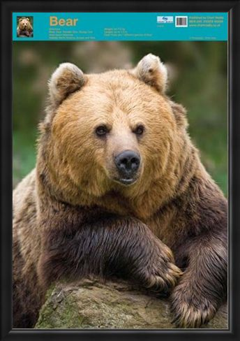 Framed Framed Nature's Big Teddy Bear - Bear