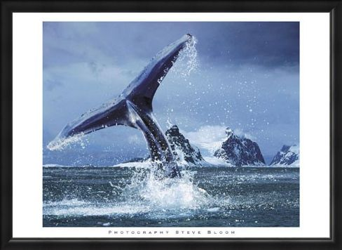 Framed Framed Antarctica - Steve Bloom