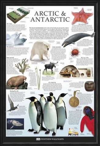 Framed Framed The Arctic & Antarctic - Dorling Kindersley