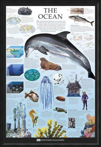 Framed Framed The Ocean - Dorling Kindersley