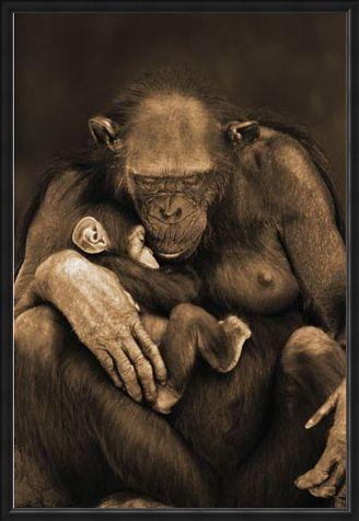 Framed Framed Motherhood - Chimpanzee with Child