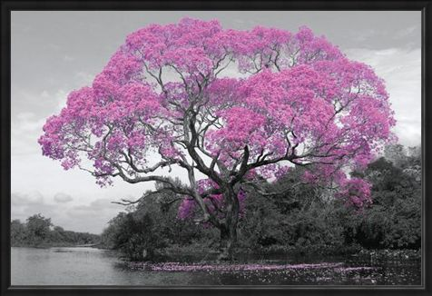 Framed Framed Tree In Bloom - Natural Pink