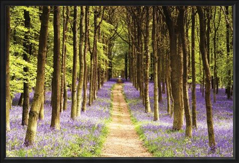 Framed Framed Woodland Path - Luscious Spring Landscape