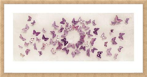 Framed Framed Kaleidoscope of Butterflies - Ian Winstanley