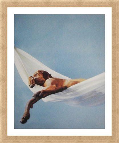 Lazy Afternoon Rachael Hale Print Buy Online
