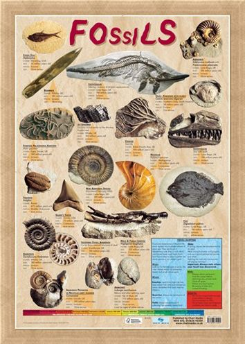 Framed Framed Fossils - Educational Chart