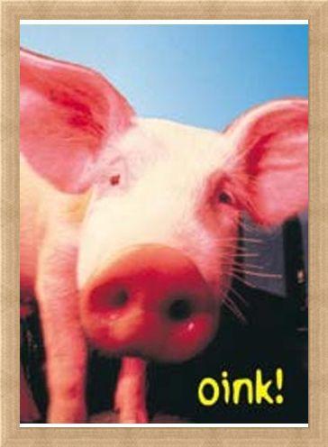 Framed Framed Oink - Pig