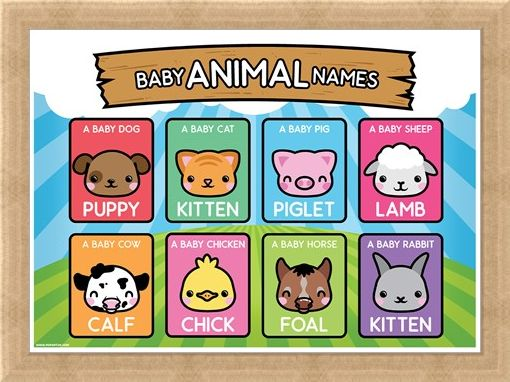 Framed Framed Baby Animal Names - Learning Is Fun