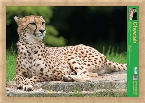 Framed Framed The Cheetah - Wild Facts