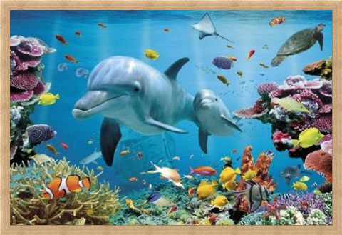 Framed Framed Underwater Dolphin Fantasy - Tropical Dolphins
