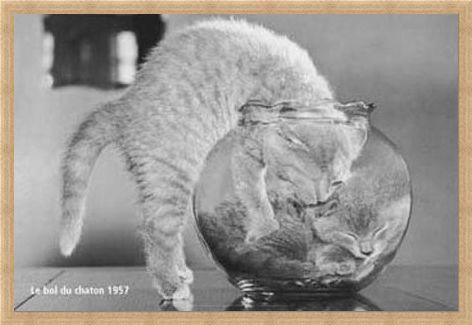 Framed Framed Bowl of Cats - Le Bol Du Chaton