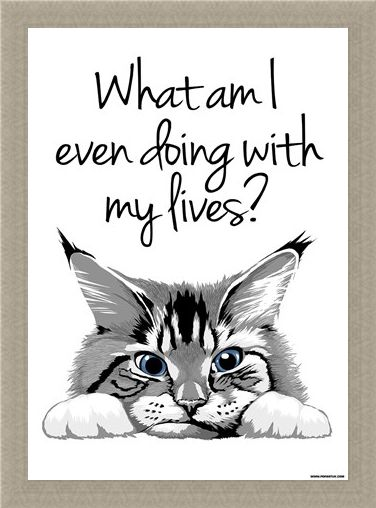Framed Framed A Feline Fiasco - What Am I Even Doing With My Lives?