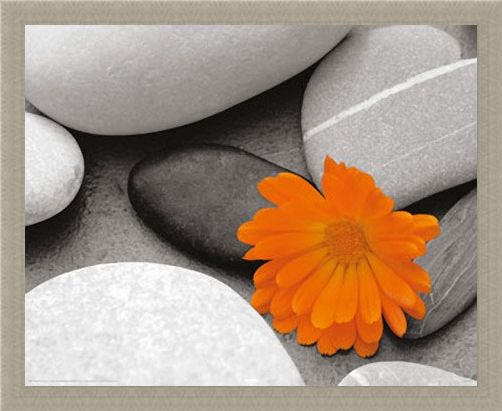 Framed Framed Marigold and Pebbles - Bright Flower amongst Stones