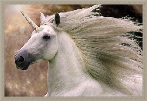 Framed Framed Unicorn - Bob Langrish