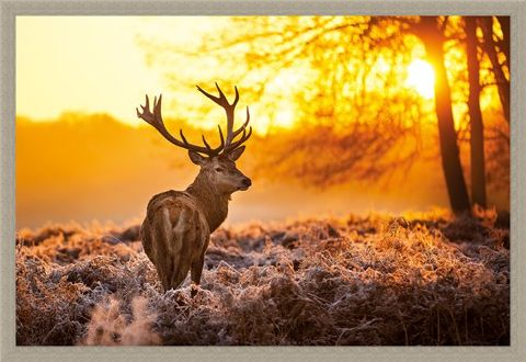 Framed Framed Golden Stag - Wildlife Wonders of The Sunrise