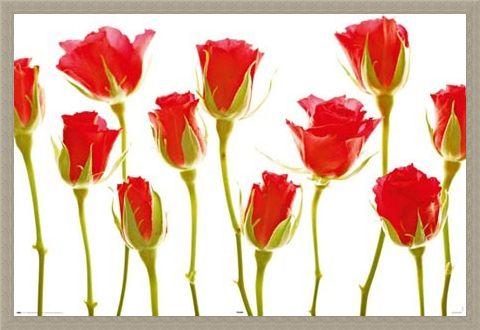 Framed Framed You Are Treasured - Eleven Roses
