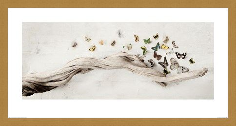 Framed Framed Drift of Butterflies - Ian Winstanley
