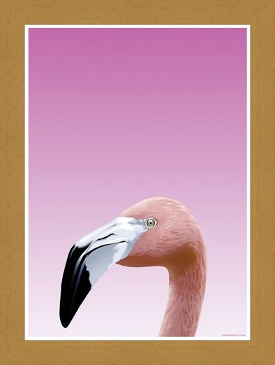 Framed Framed Flamboyant Flamingo - Inquisitive Creatures