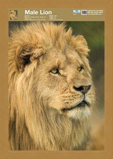 Framed Framed Animal World - Lion